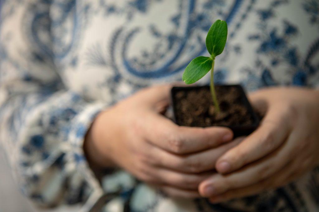 Bild på en gurkplanta